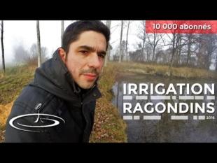 Irrigation et ragondins – 2016