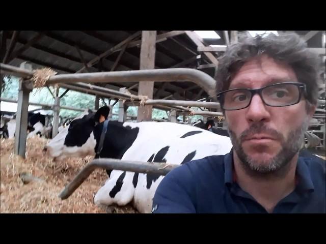 Mais au fait, ça mange quoi une vache?