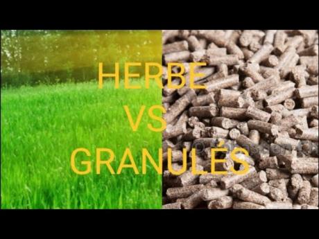 Herbe vs granulés : le match croissance et parasitisme