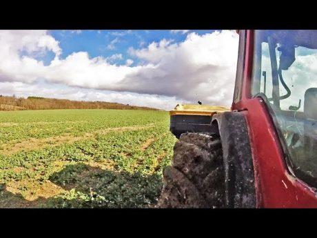 Épandage d'un engrais solide sur le colza – 2019