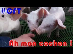 Ah mon cochon !!! ou la visite d'un élevage de porc en bretagne chez david.