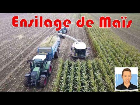 Maïs ensilage récolte 2017.