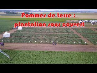 Pommes de terre : plantation sous couverts !!!