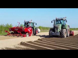 La plantation de pommes de terre.