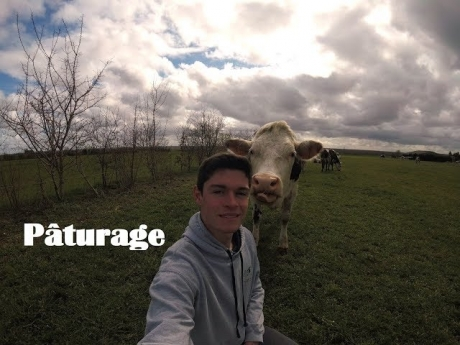 Pâturage : pourquoi et comment les vaches mangent l'herbe au pré