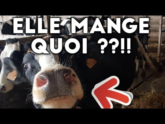 Une vache mange quoi en france !!?
