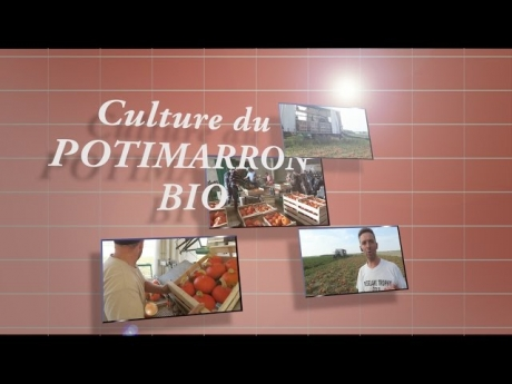 La culture des potimarrons bio