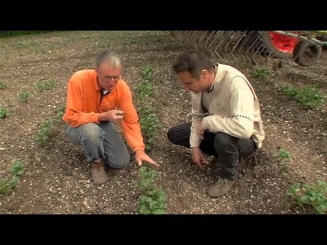 Désherbage mécanique ou alternatif de la pomme de terre hd