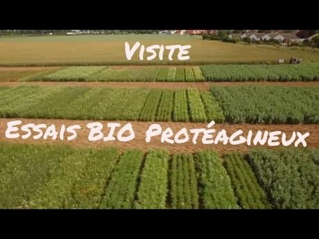 Essai bio carvin proteagineux visite juin 2016