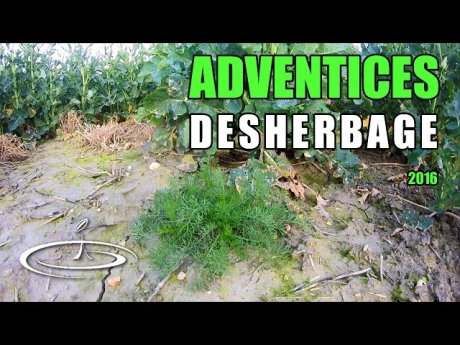 Mauvaises herbes, identifier pour désherber – 2016