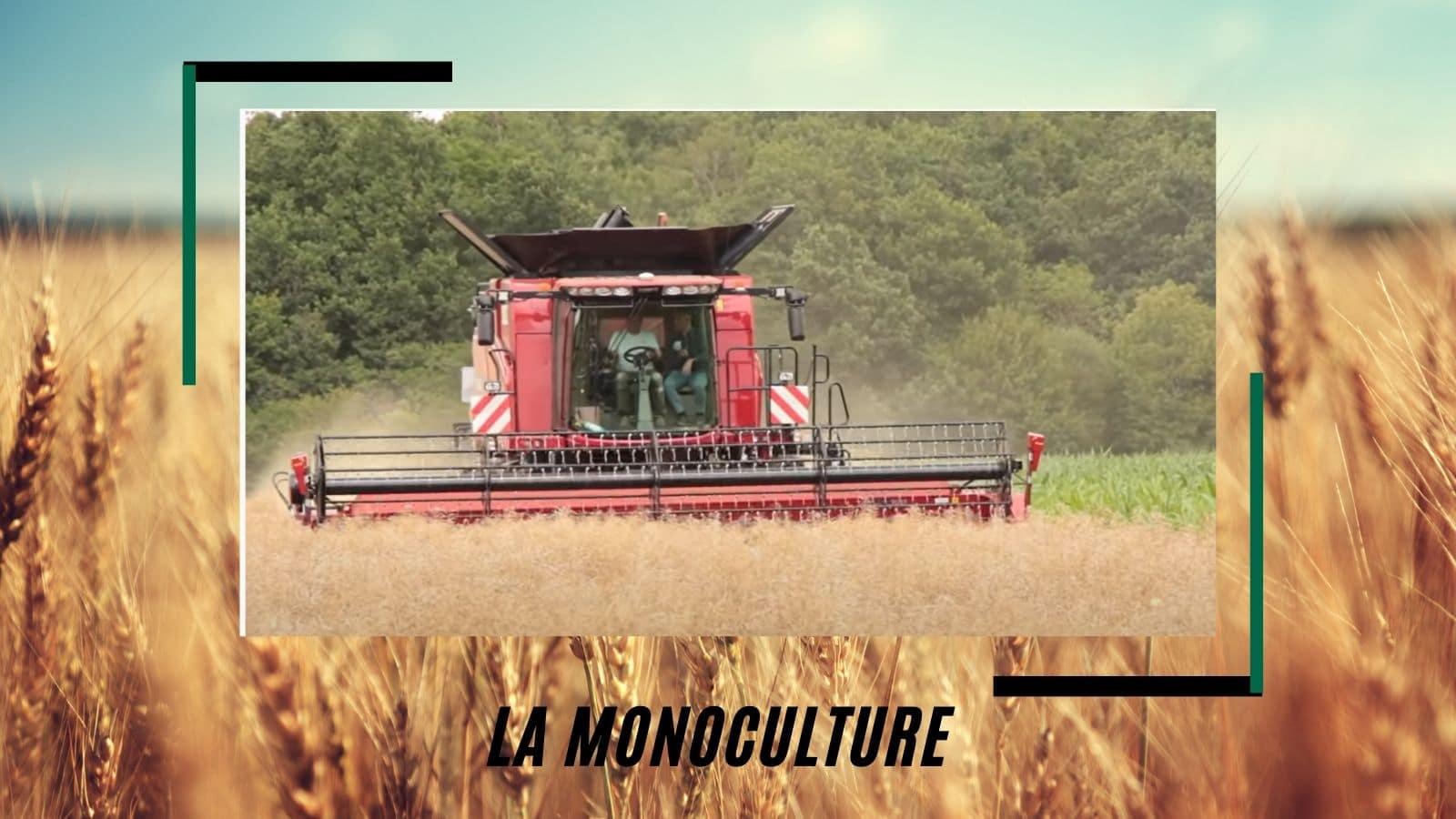 La monoculture