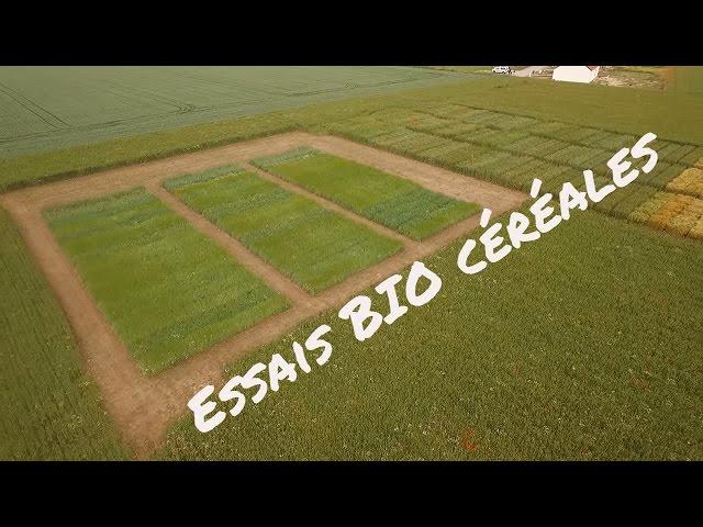 Essai bio carvin cereales visite juin 2016