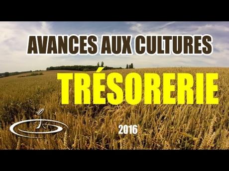 Avances aux cultures et trésorerie – 2016