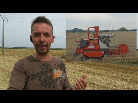 Battage des essais de blé.