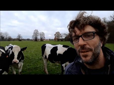 Mes vaches sont elles heureuses? la docilité expliquée