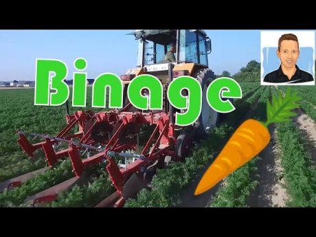 Binage des carottes