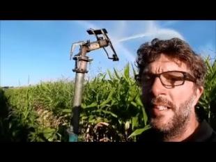 Irriguer le maïs consomme t'il trop d'eau?