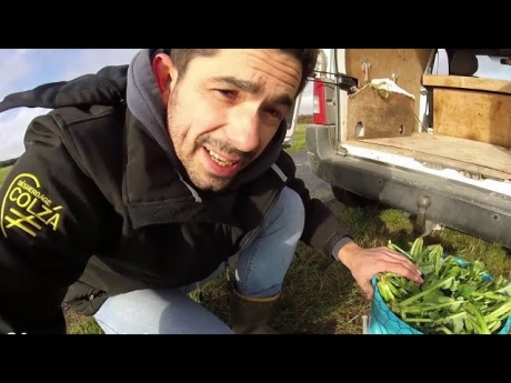 Des larves et asticots dans le colza – 2018