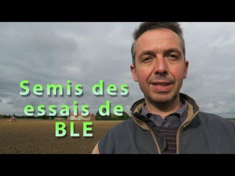 Le semis des essais de blé.