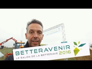 Betteravenir, la filliére betteravière