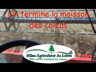 On termine la moisson 2017 des colzas