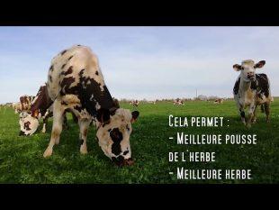 Exceptionnel ! les vaches en libertÉ au pre en fÉvrier !