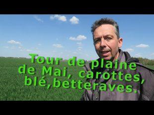 Tour de plaine de mai carottes, betteraves, blé, pommes de terre …