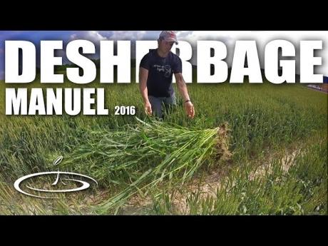Désherbage manuel des mauvaises herbes – 2016