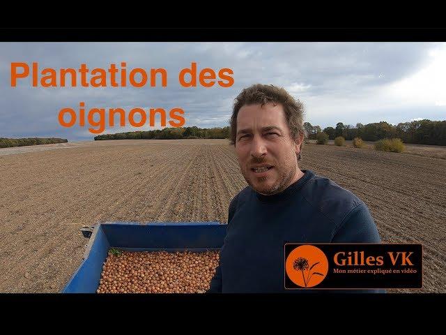 Plantation des oignons