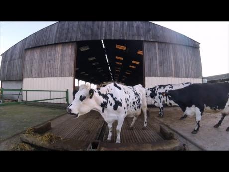 La traite, une astreinte quotidienne pour un bon lait !
