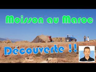 Moisson dans les montagnes du maroc