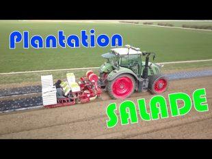 Plantation des salades bio
