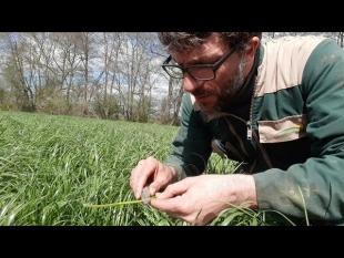 Bien prévoir sa date de récolte d'herbe: observer et… décider!