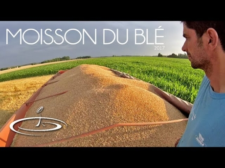 Un jour, la moisson du blé – 2017
