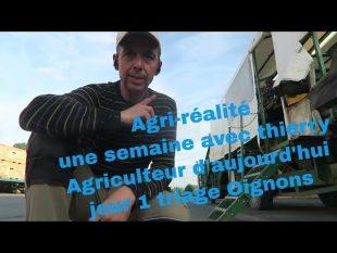 Agri réalité : jour 1 triage oignons