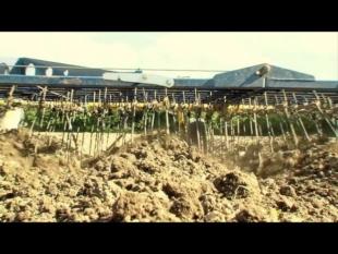 Le désherbage mécanique ou alternatif de la pomme de terre episode n°1