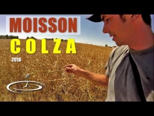 Moisson du colza – 2016
