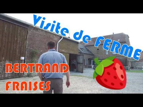 Visite de ferme : bertrand et ses fraises