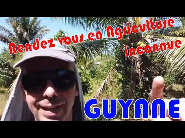Découverte de l'agriculture guyanaise de ces richesses et de sa diversité.