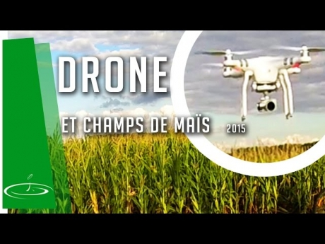 Dégâts de blaireaux dans le maïs, vus par un drone – 2015