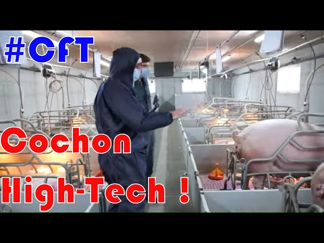 Cochon, tracteurs et légumes ! [tour de france] #cft 🚜 jour 7