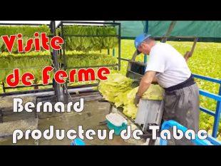 Production de tabac. visite de la ferme de bernard.