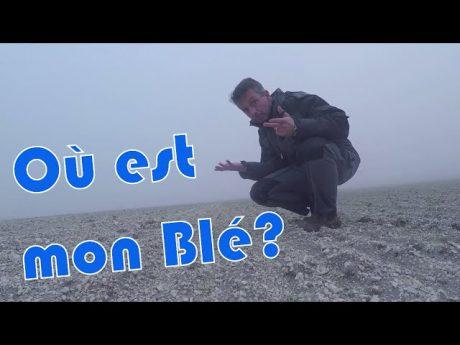 Tour de plaine : où est mon blé ?