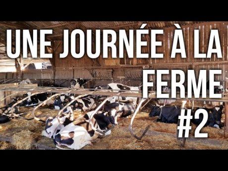 Une journÉe a la ferme #2