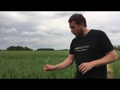 Floraison du blé et traitement fusariose