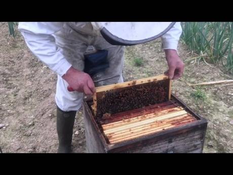 Des abeilles pour mes oignons