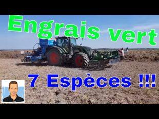 Semis d'engrais vert : 7 espèces en 2018