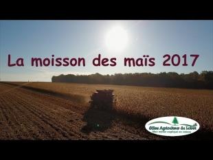 La moisson des maïs 2017