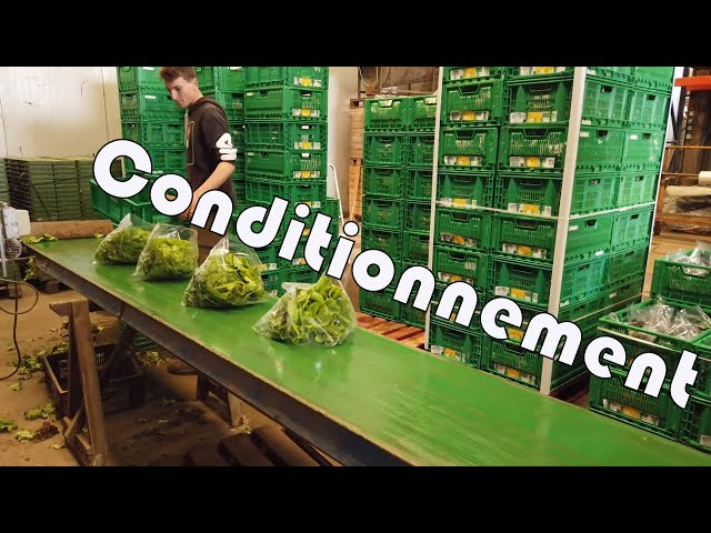 Conditionnement de nos salade en bio