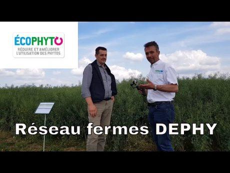 Le réseau des fermes dephy, interview d'un agriculteur.